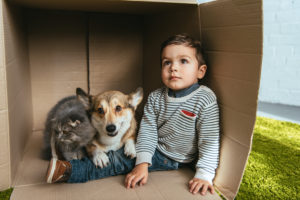 Boy and dog in a cardboard box