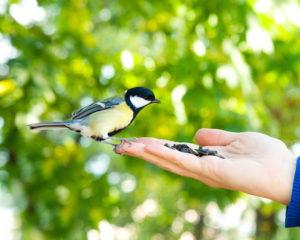 Feeding bird from hand